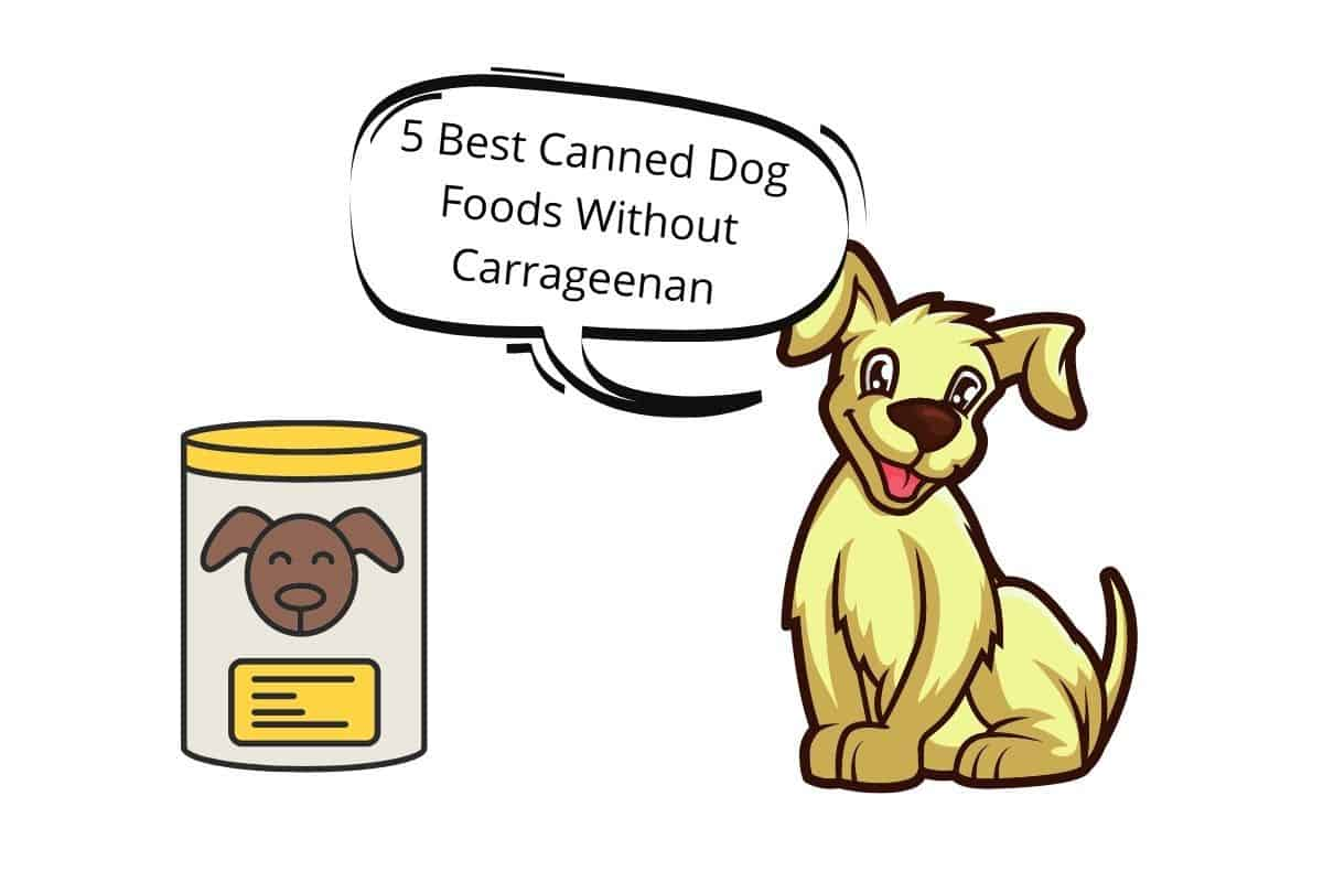 "A dog with a speech bubble saying ""5 Best Canned Dog Foods Without Carrageenan"""