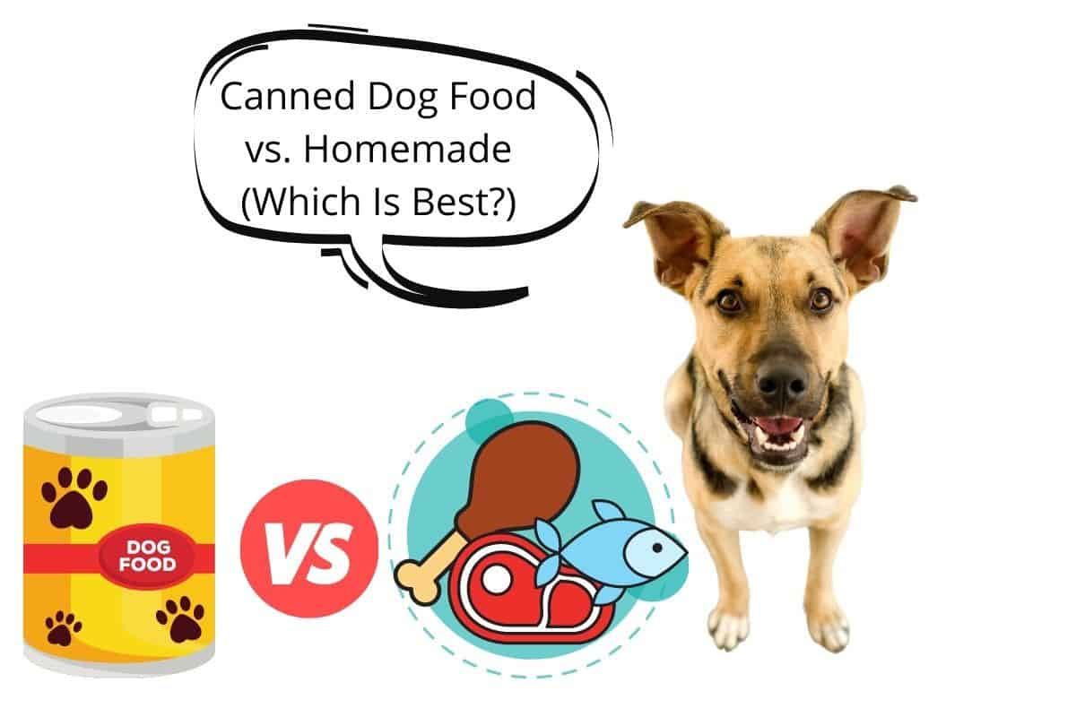 Dog with speech bubble saying Canned Dog Food vs. Homemade (Which Is Best_)