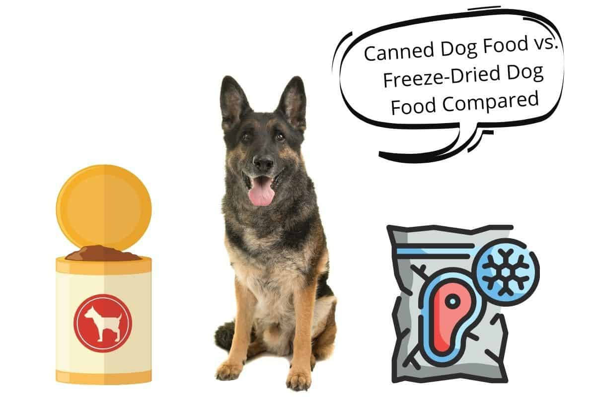 Dog with a speech bubble saying Canned Dog Food vs. Freeze-Dried Dog Food Compared