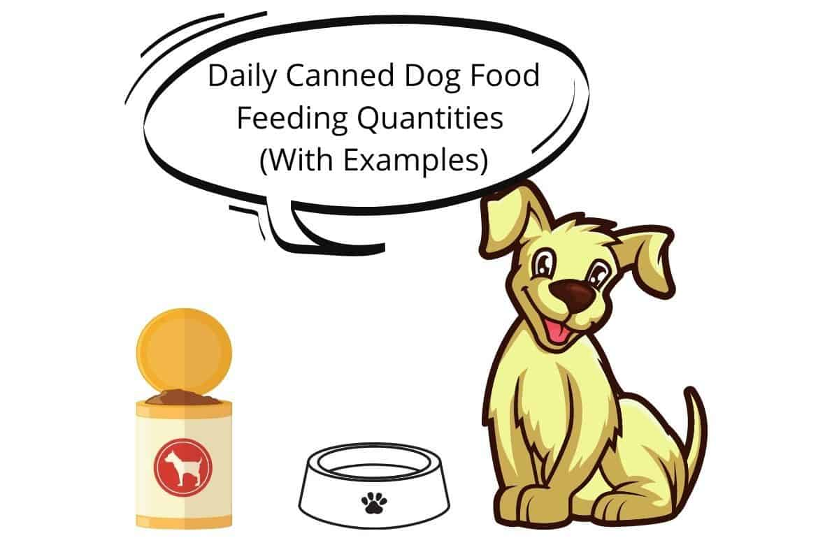 Dog with a speech-bubble saying Daily Canned Dog Food Feeding Quantities (With Examples)