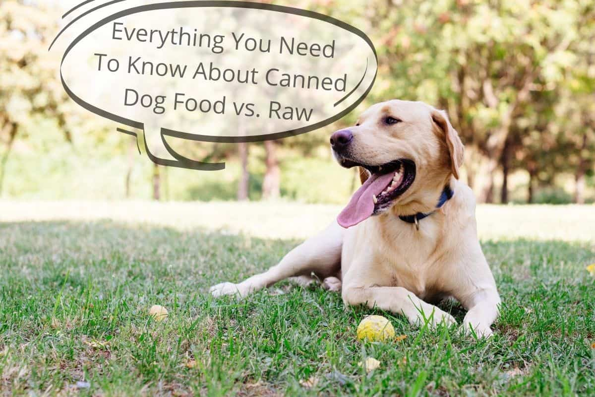 "Dog with a speechbubble saying ""Everything You Need To Know About Canned Dog Food vs. Raw"""