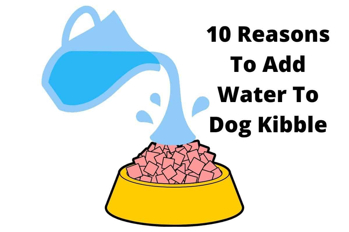 Pouring water on kibble