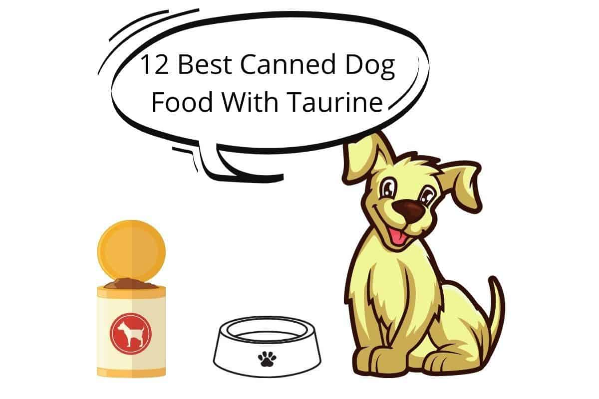 12 Best Canned Dog Food With Taurine