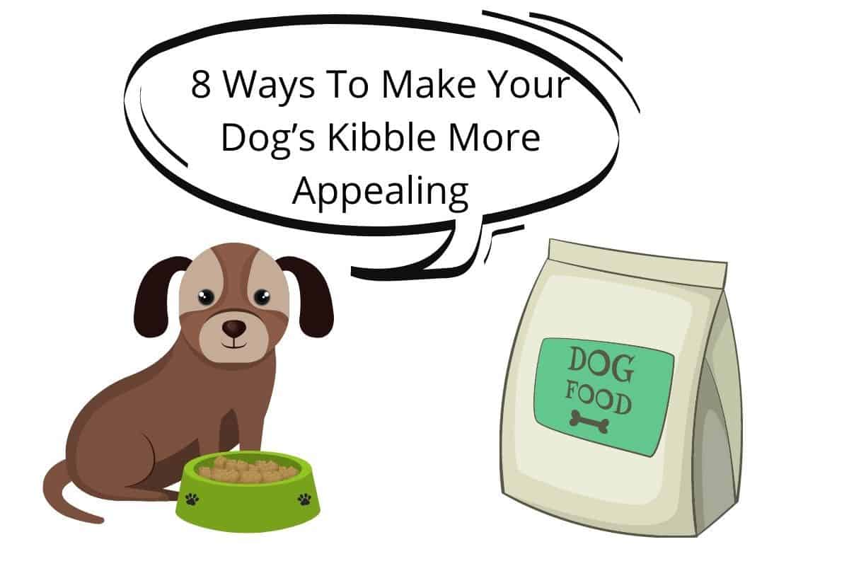 8 Ways To Make Your Dog's Kibble More Appealing