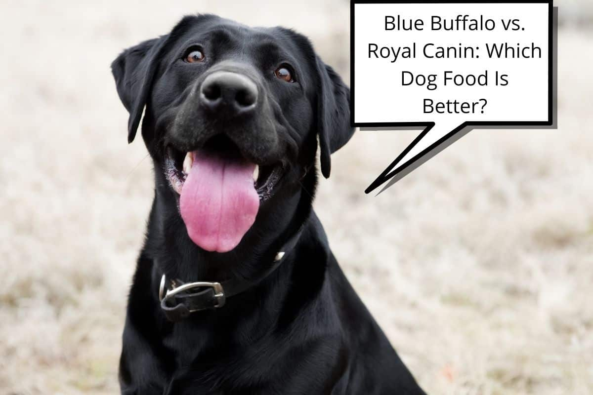 """dog and speech bubble saying""""Blue Buffalo vs. Royal Canin Which Dog Food Is Better"""""""