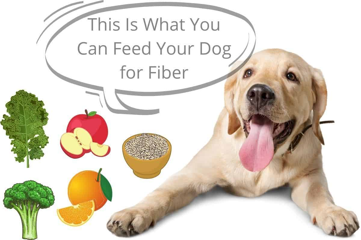 This Is What You Can Feed Your Dog for Fiber