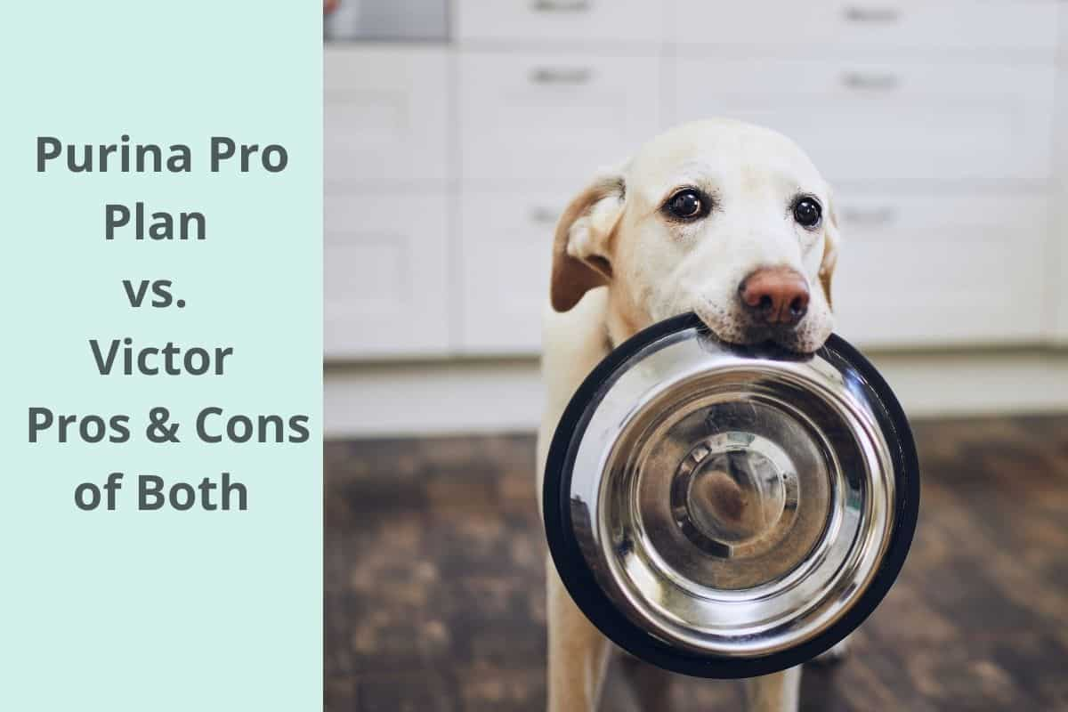 Purina Pro Plan vs. Victor: Pros & Cons of Both