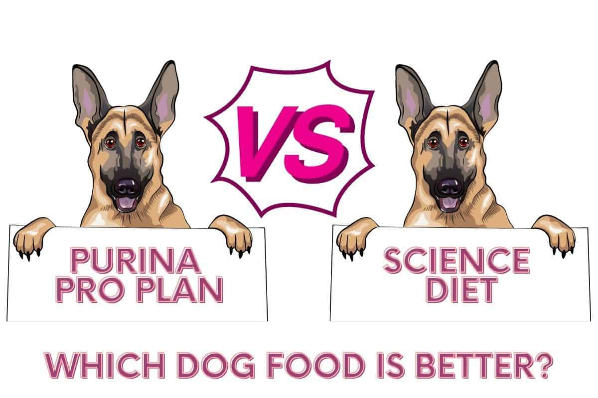 Purina vs Science which dog food is better?
