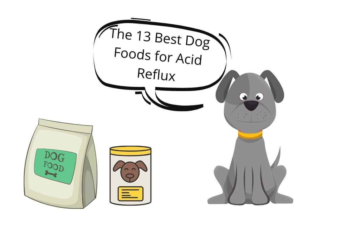 """Dog with speechbubble""""The 13 Best Dog Foods for Acid Reflux"""""""