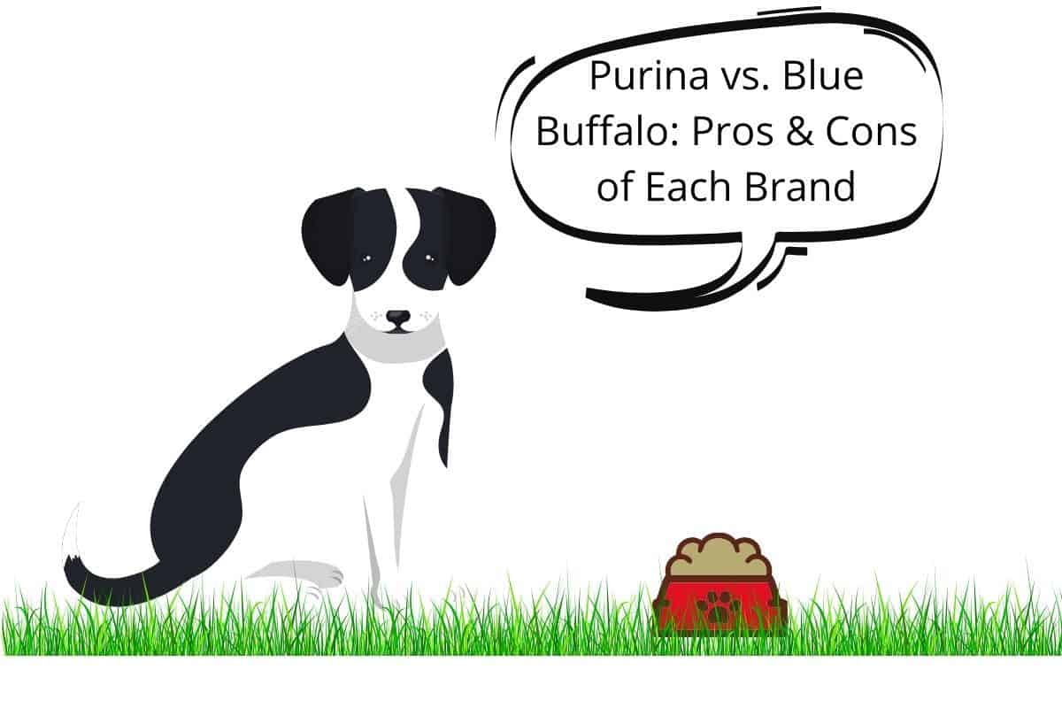 """Dog and a speech bubble saying """"Purina vs. Blue Buffalo Pros & Cons of Each Brand"""""""