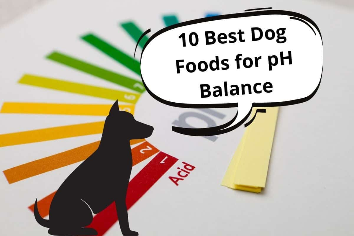 """dog and a speech bubble saying """"10 Best Dog Foods for pH Balance"""""""