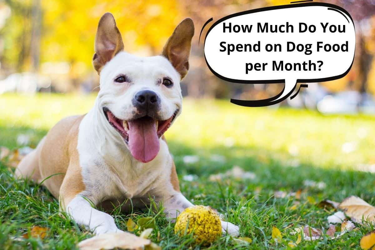 """dog with a speech bubble """"how much do you spend on dog food each month"""""""