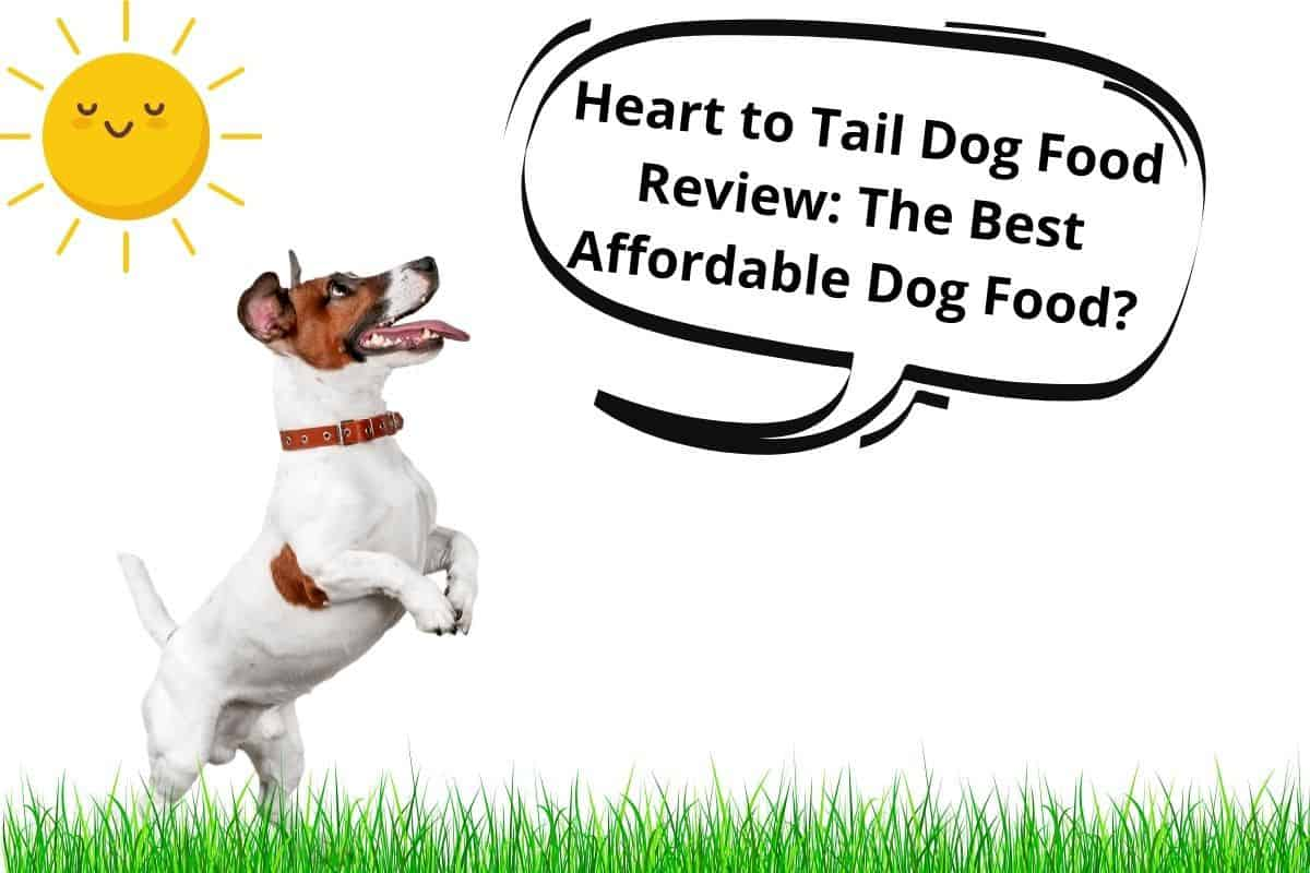 Heart to tail dog food review
