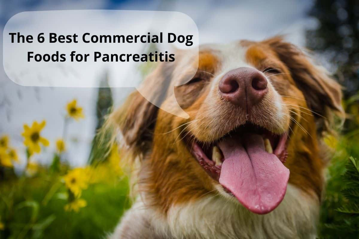 """dog with a speach bubble saying """"The 6 Best Commercial Dog Foods for Pancreatitis"""""""